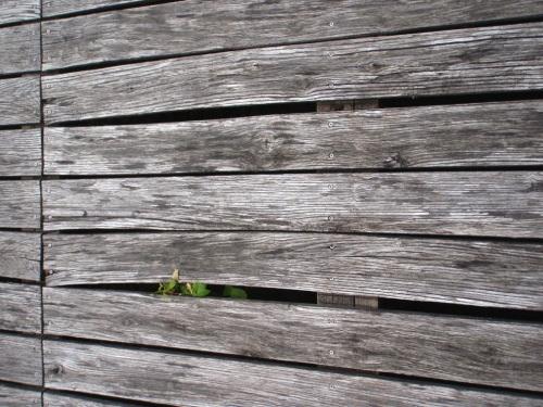 Terrasse en Robinier (faux-acacia)